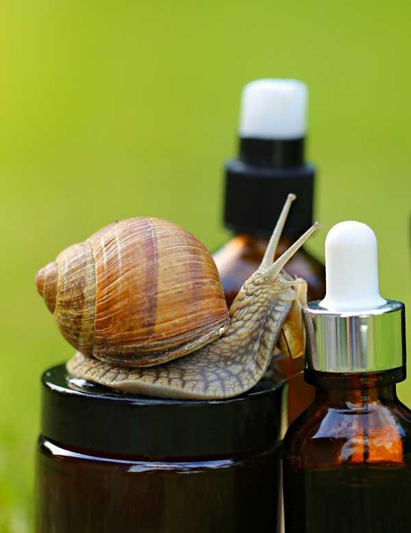 Extractul de melc în produsele cosmetice 1